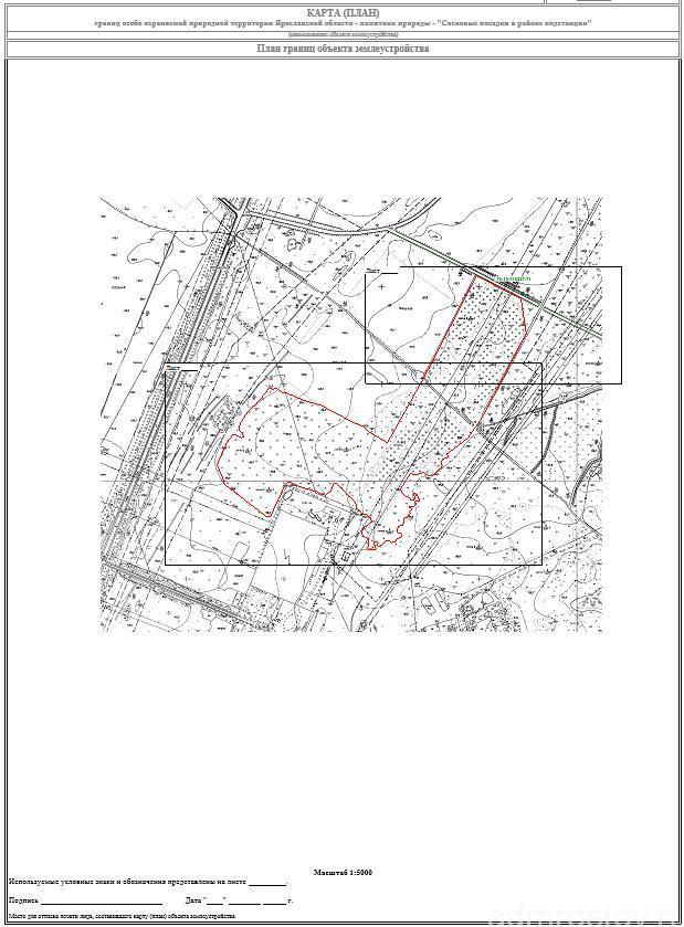 Сосновые посадки в районе подстанции